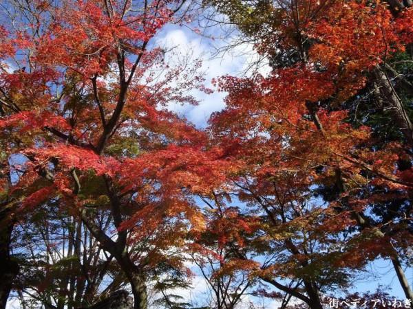 いわき市湯本の温泉神社の紅葉6