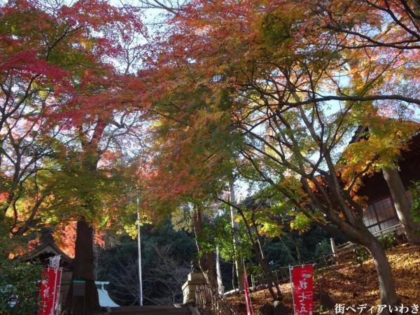 いわき市湯本の温泉神社の紅葉2
