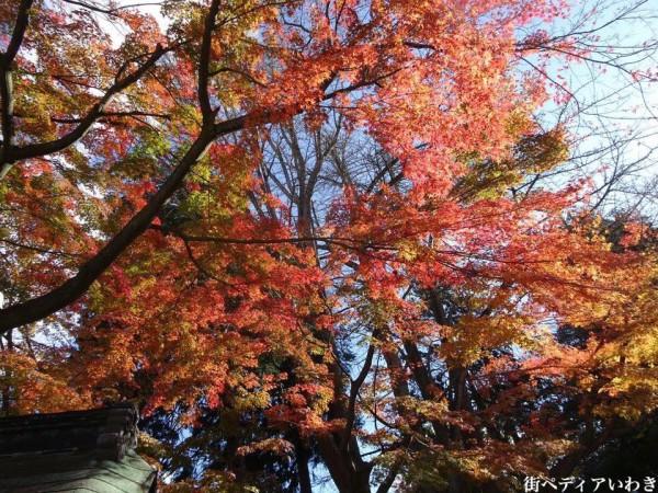 いわき市湯本の温泉神社の紅葉3