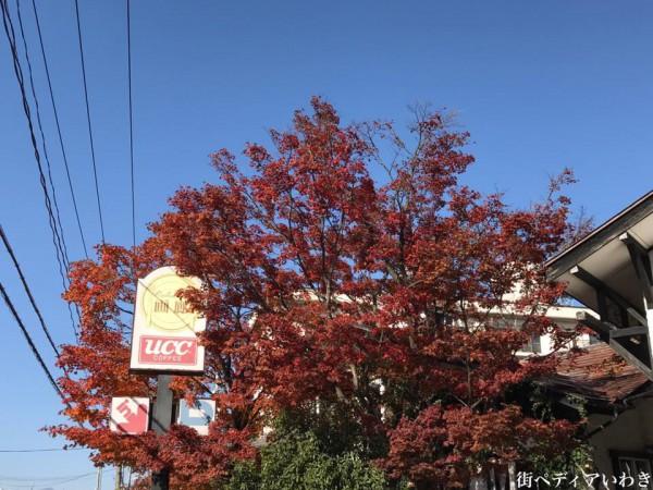 福島県郡山市カフェレストラン画廊8