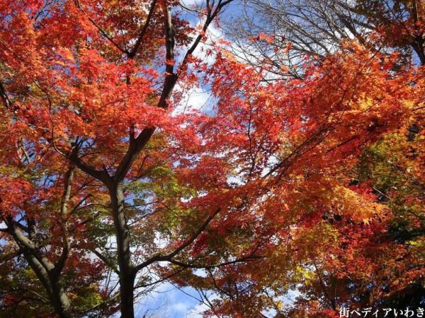 いわき市湯本の温泉神社の紅葉5