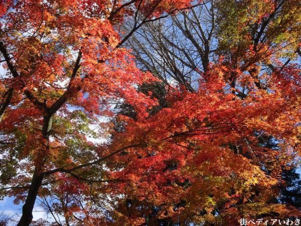 いわき市湯本の温泉神社の紅葉4