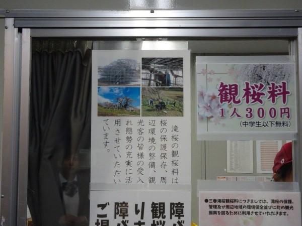 福島県三春町の滝桜日本の三大桜国の天然記念物5