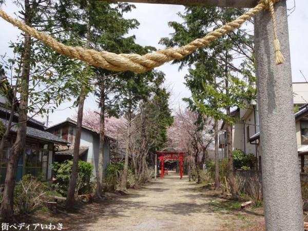 福島県いわき市三島八幡神社の桜(シダレザクラ)5