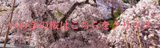 福島県いわき市の桜