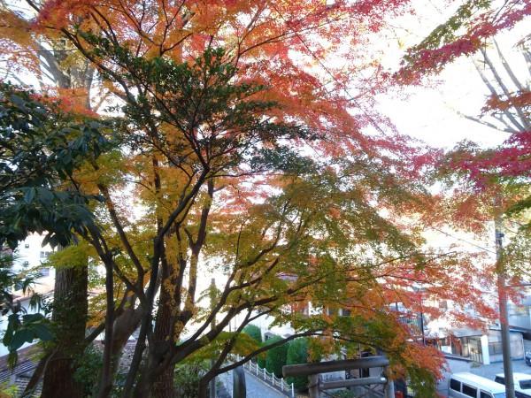 いわき市湯本の温泉神社-181128-9