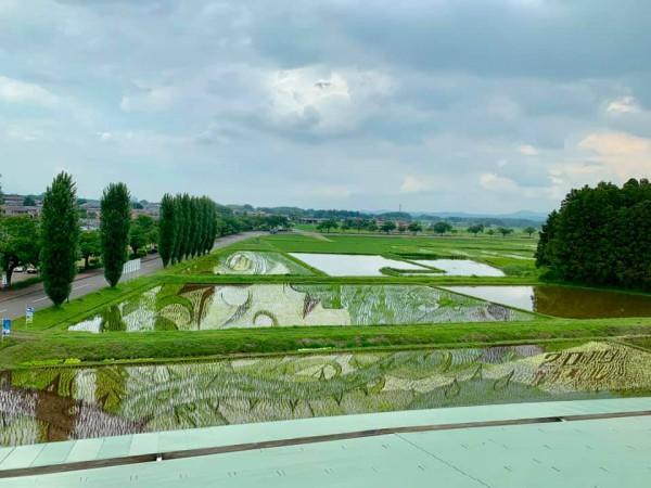 福島県鏡石の田んぼアート2019-190620-17