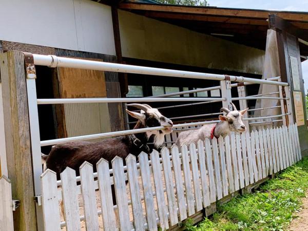 福島県鏡石町の岩瀬牧場-210602-9